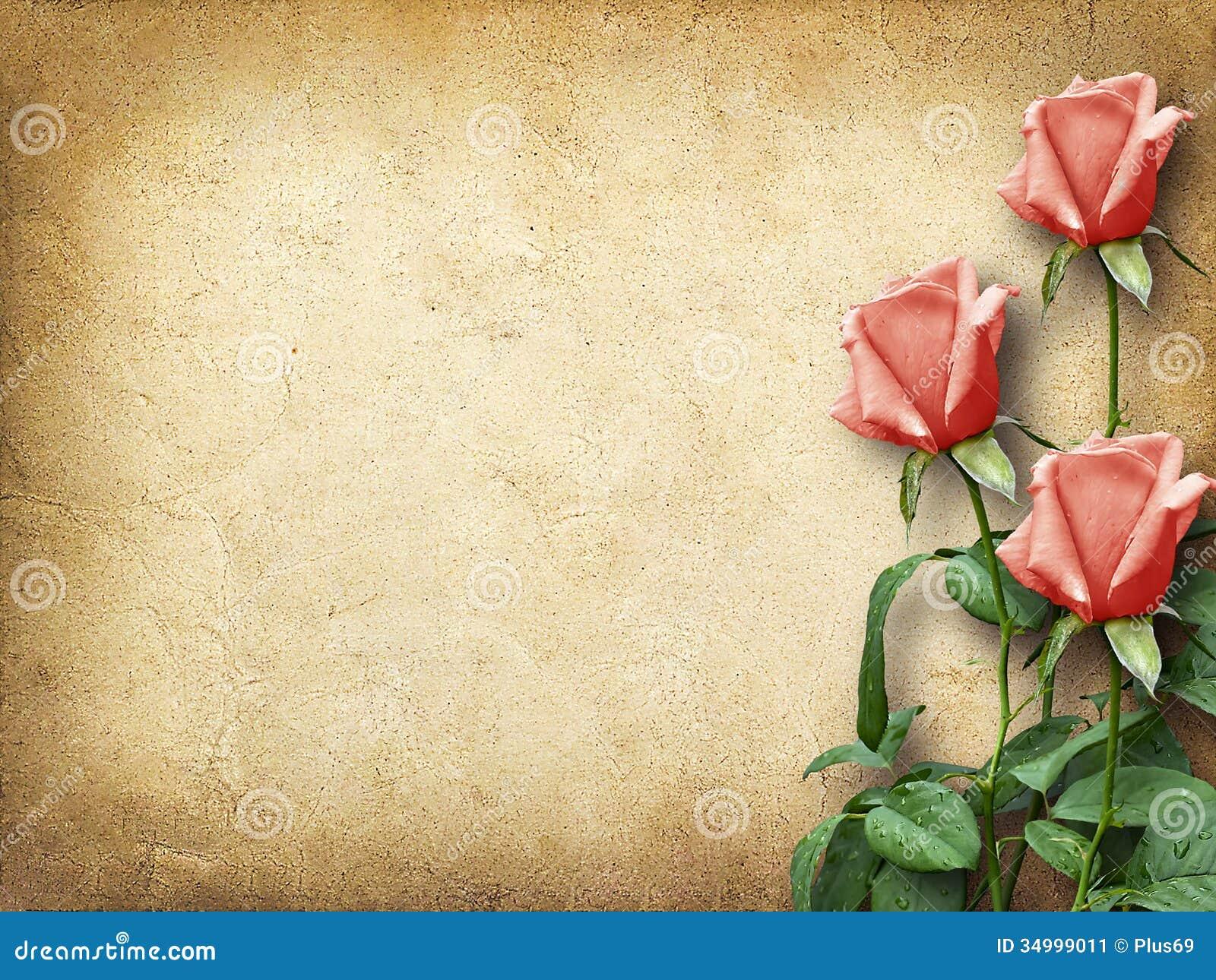 Fotos de rosas Las rosas de flores, rosas fotos, fondos de