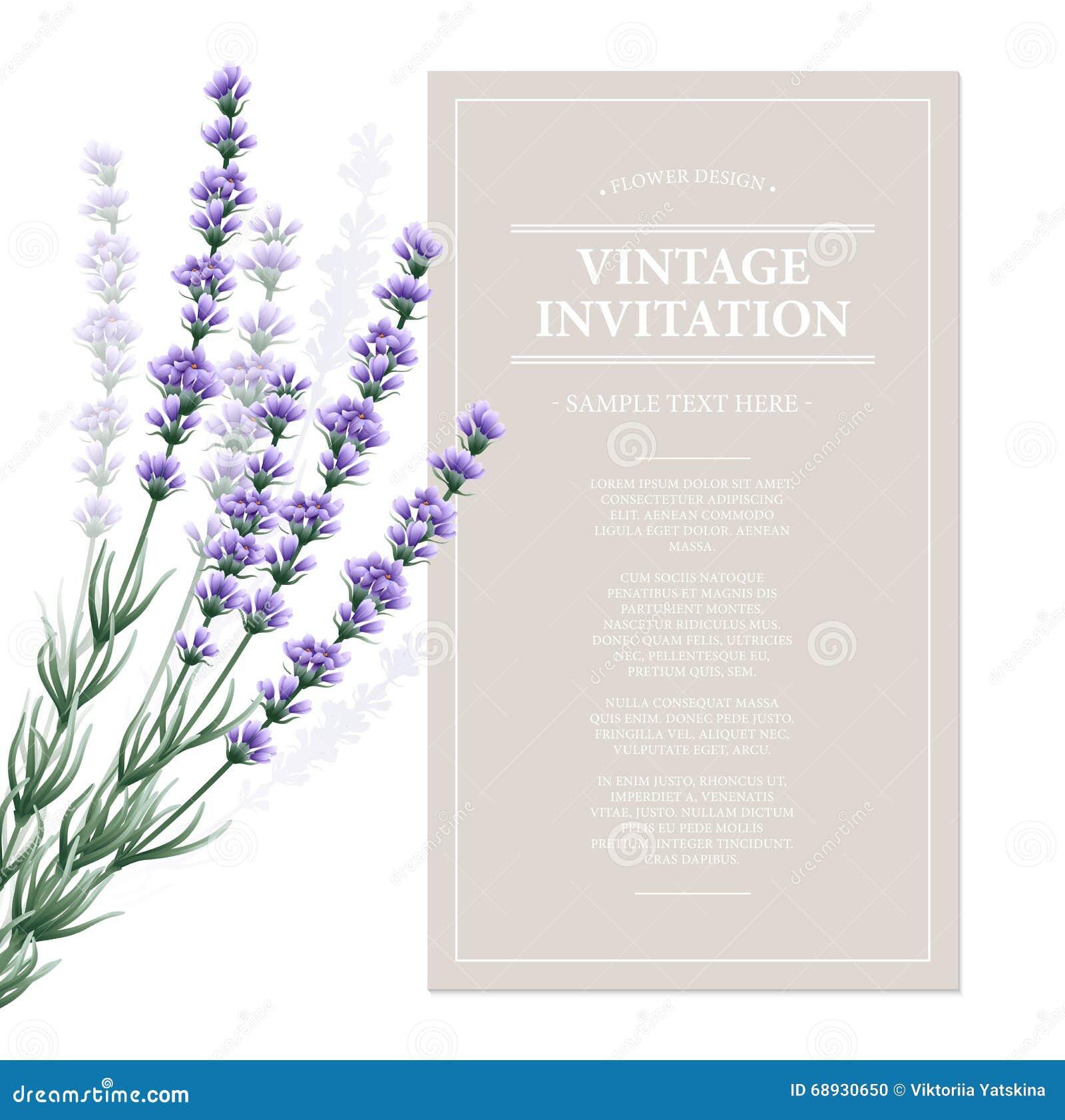 Vintage Stock Image - Lavender Plant - Botanical - The ...