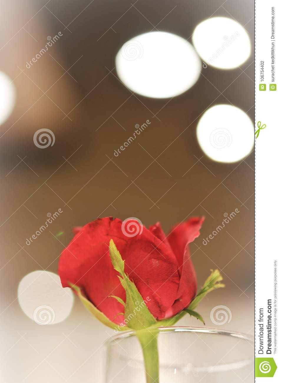 Vintage Card Of Red Flower Rose Over The Bokeh Background