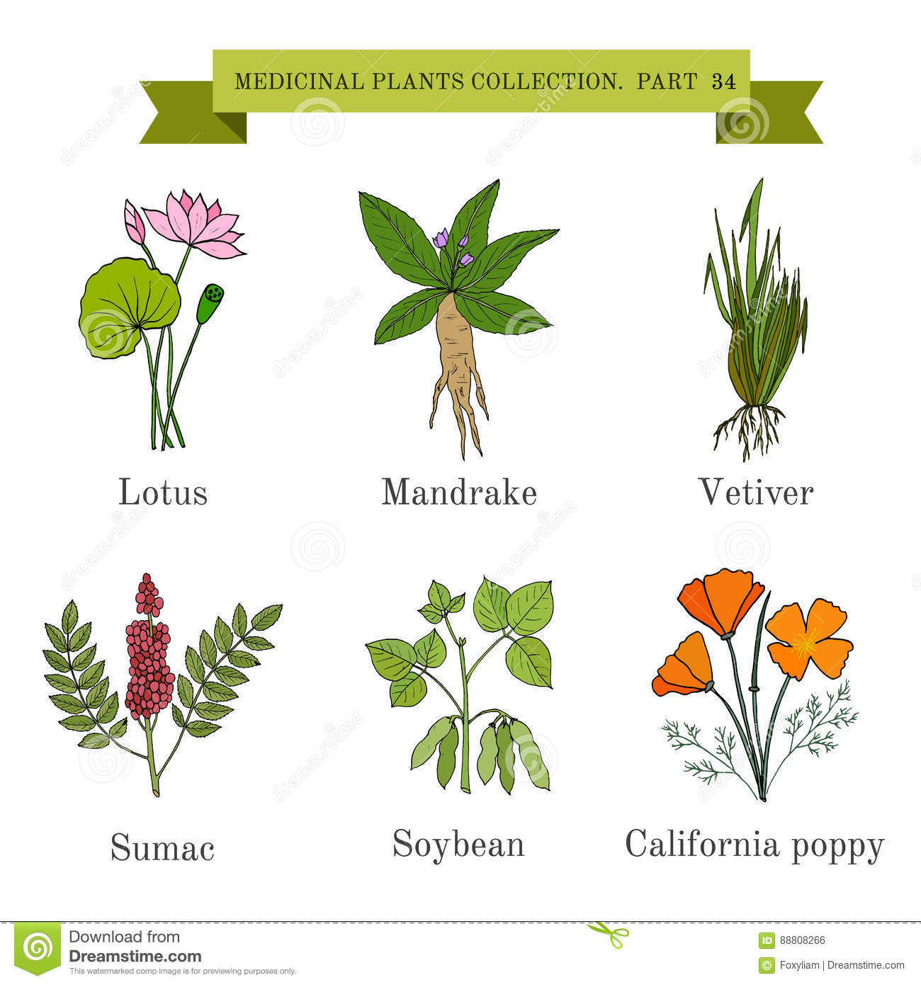 Vintage Collection Of Hand Drawn Medical Herbs And Plants Lotus