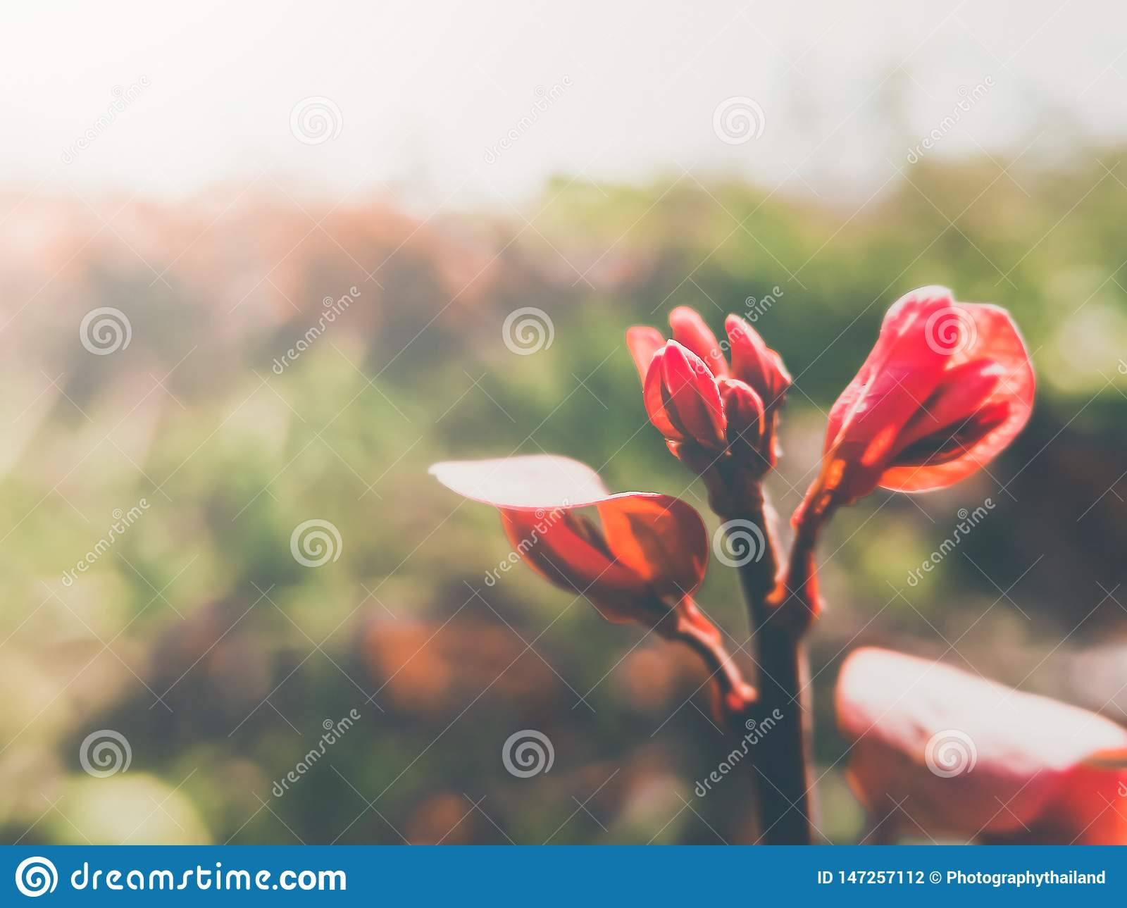 Vintage color image red young leaves and natural light background.