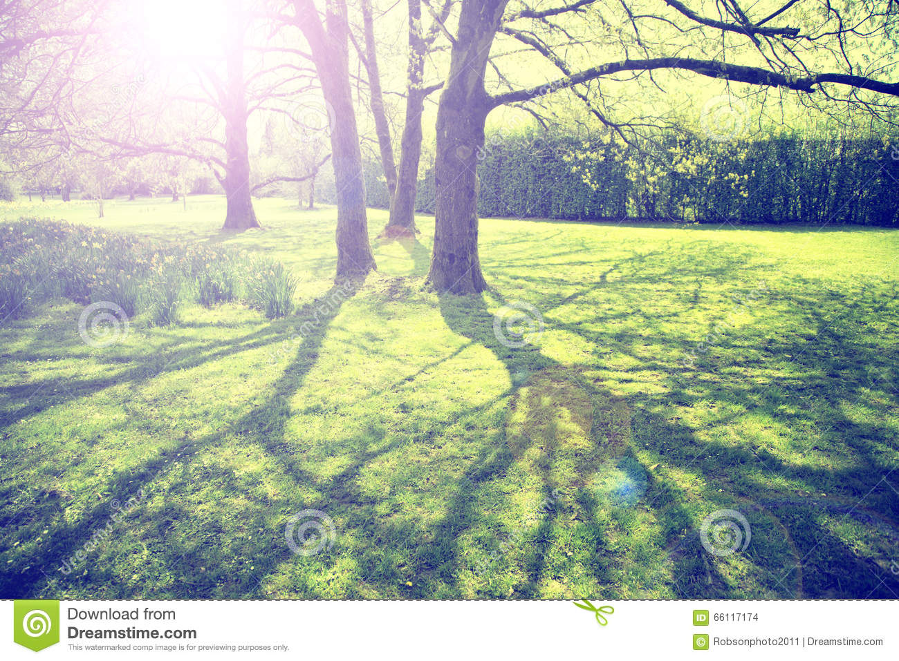 Vintage Colored Sunny Blurred Spring Season Park Trees Stock Photo ...