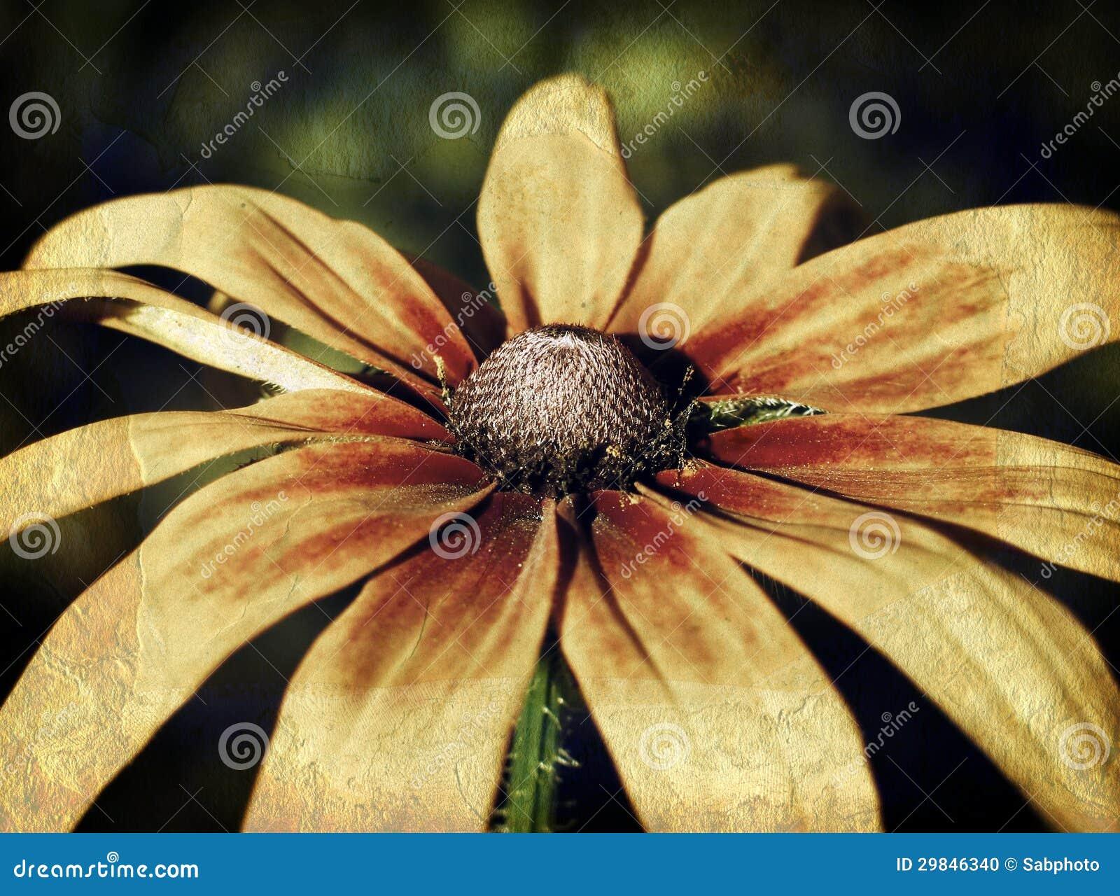 Foto do vintage de um close up da flor