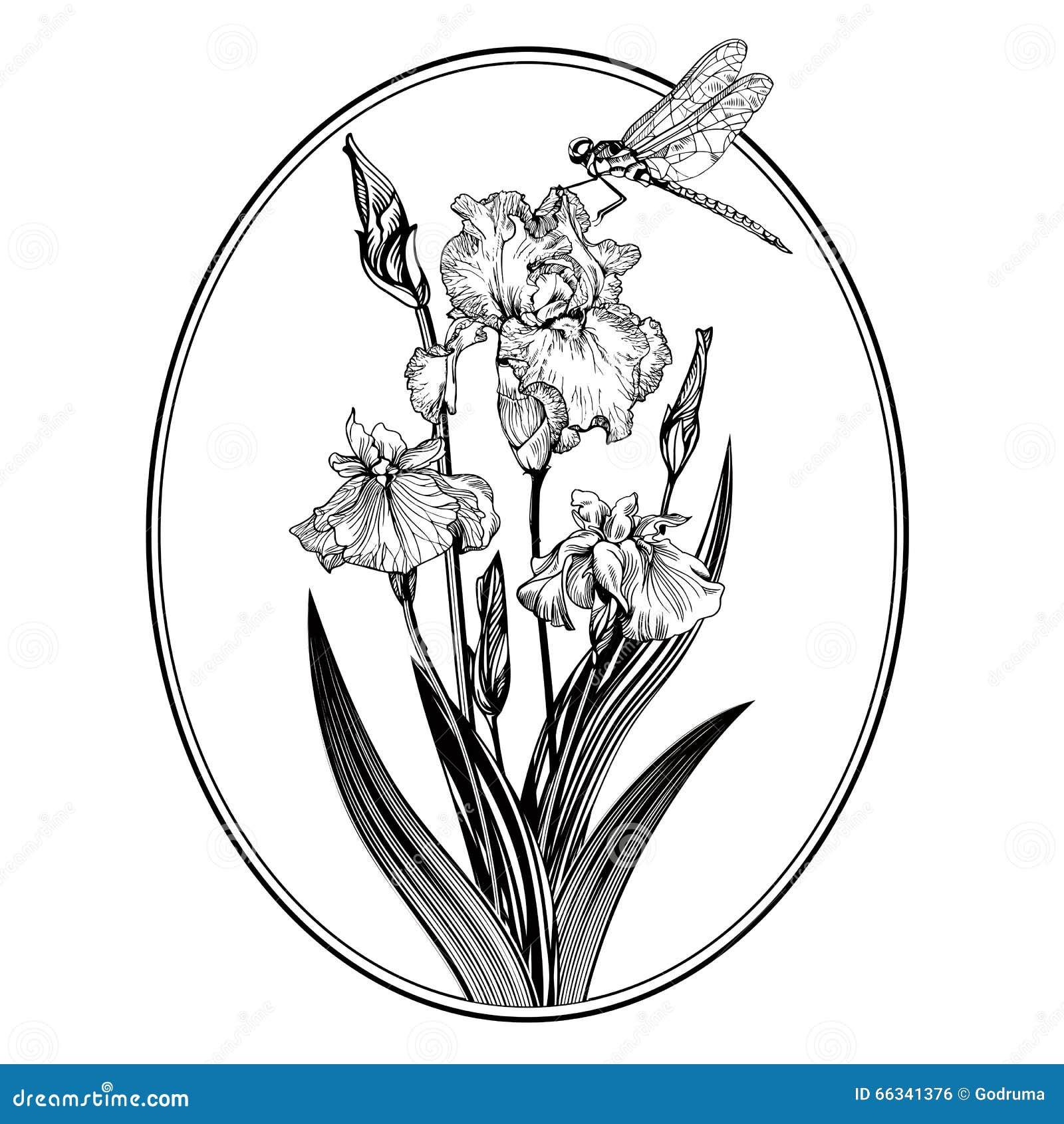 Vintage Elegant Flowers Black And White Vector Illustration Iris