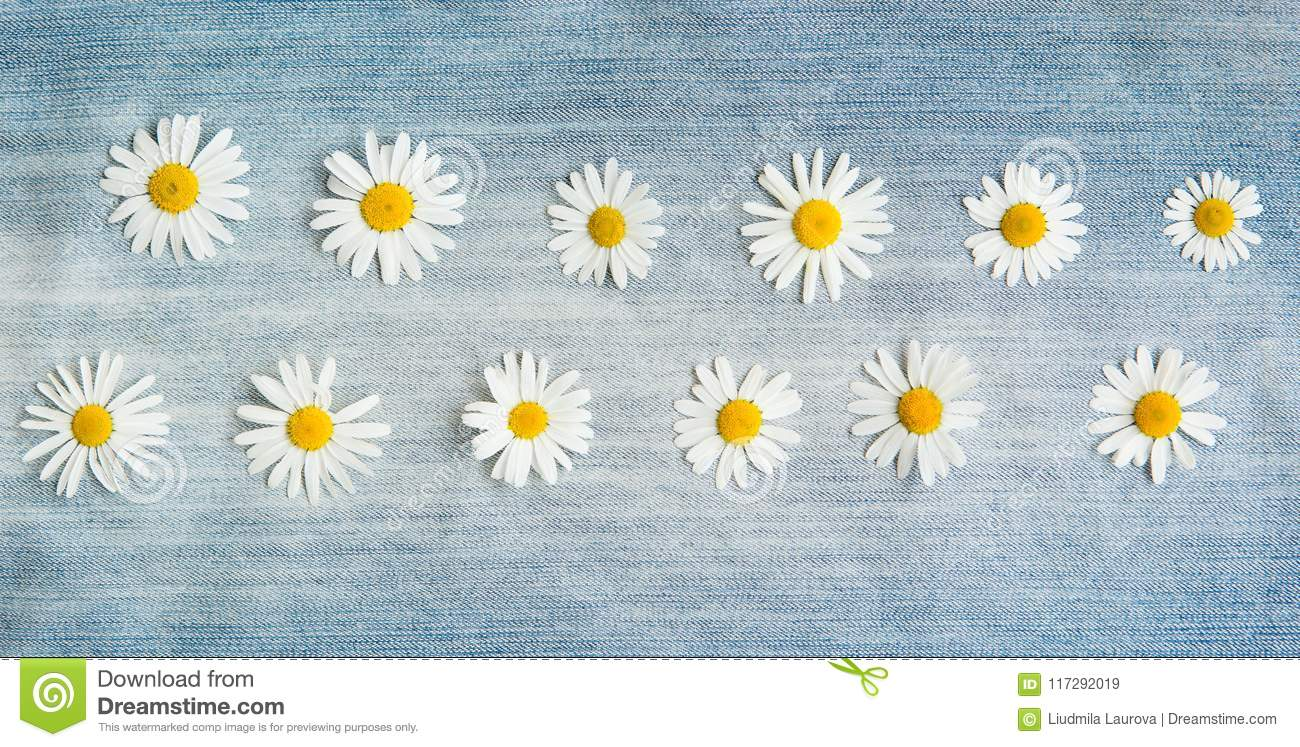 Vintage Floral Background With Daisy Flowers