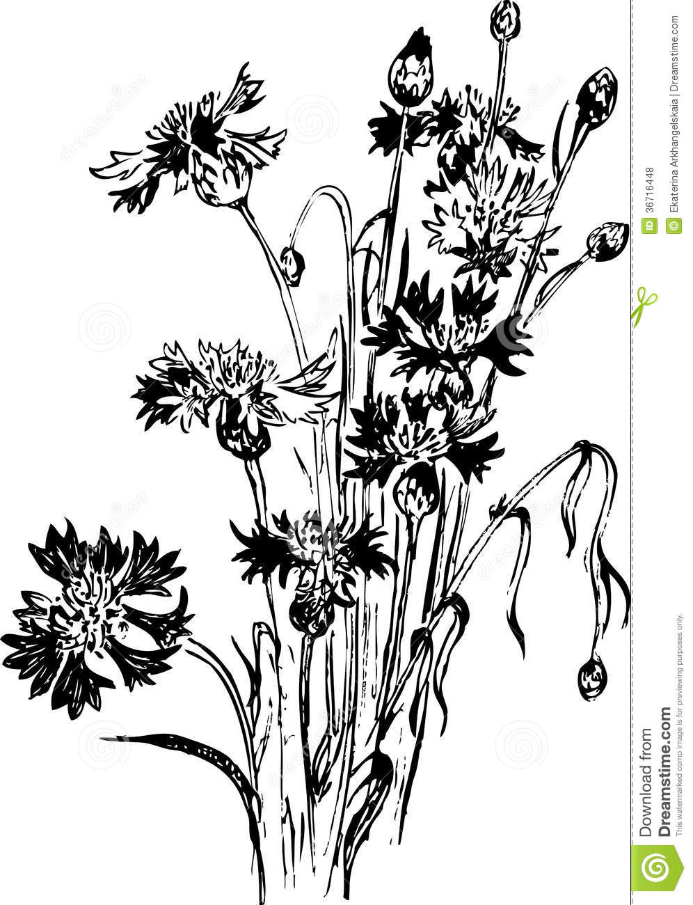 Wildflower Line Drawing : Vintage floral composition with wildflowers stock vector