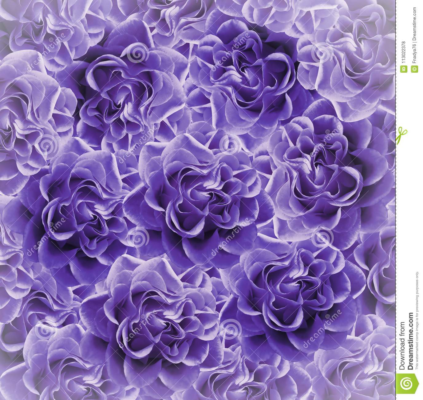 Vintage floral purple beautiful background. Flower composition. Bouquet of flowers from violet roses. Close-up.