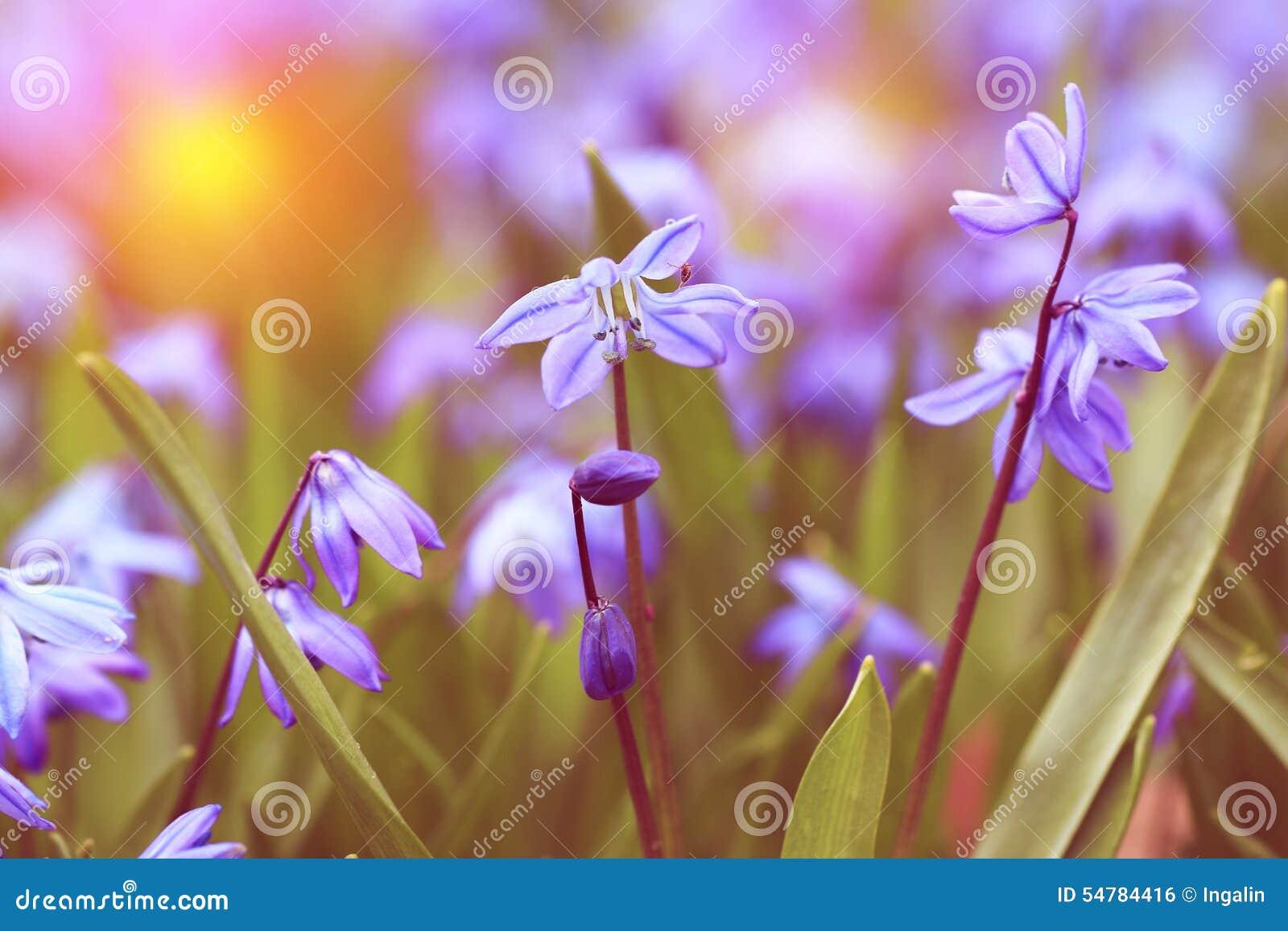 Vintage look photo of blue spring flowers stock photo image of vintage look photo of blue spring flowers mightylinksfo