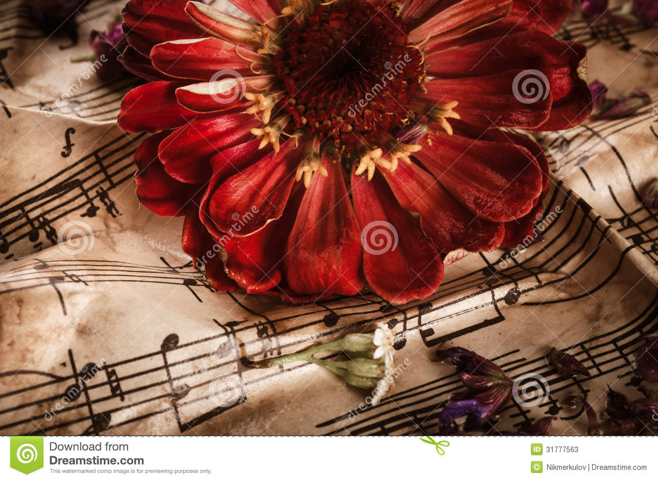 music notes backgrounds floral - photo #29