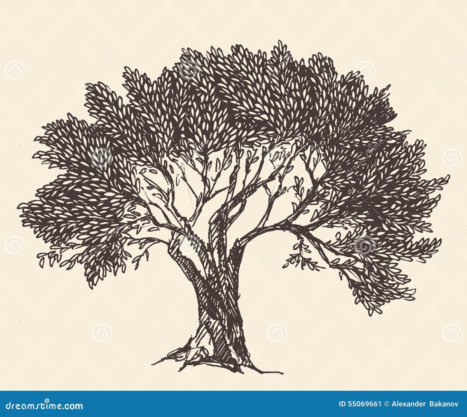 Vintage Olive Engraved Background Illustration Stock Vector Illustration Of Greek Symbol 55069661