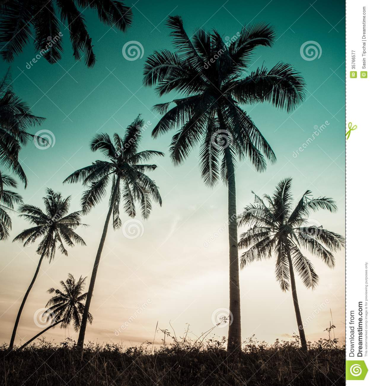 Palm Trees Vintage Wallpapers Download
