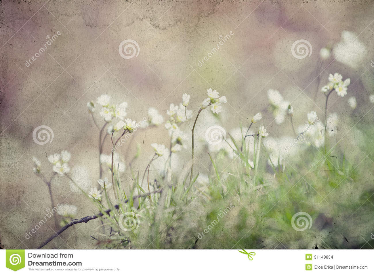 Vintage Photo Of Flower Field Stock Images - Image: 31148834