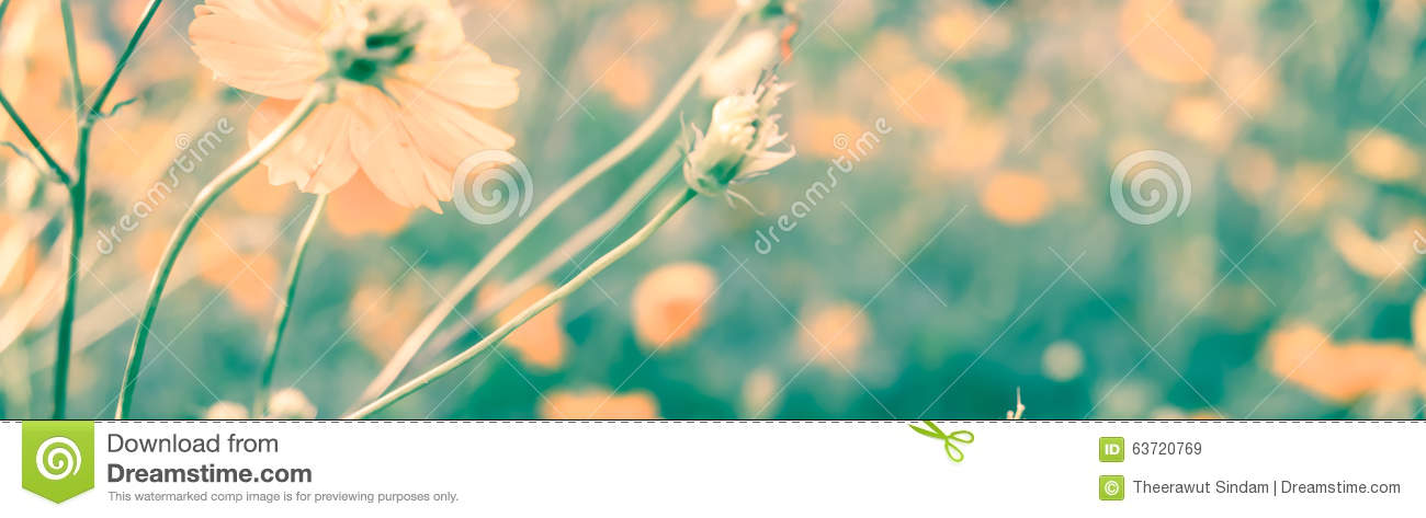 Vintage retro of flower in soft color and blurry style