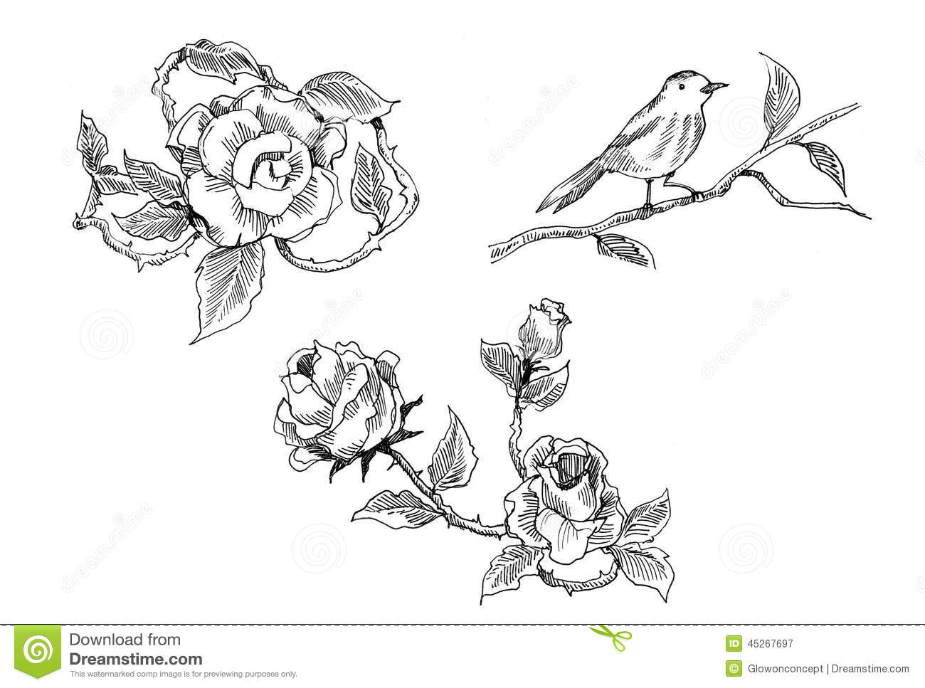 Vintage Rose And Bird Drawing Stock Illustration - Image: 45267697
