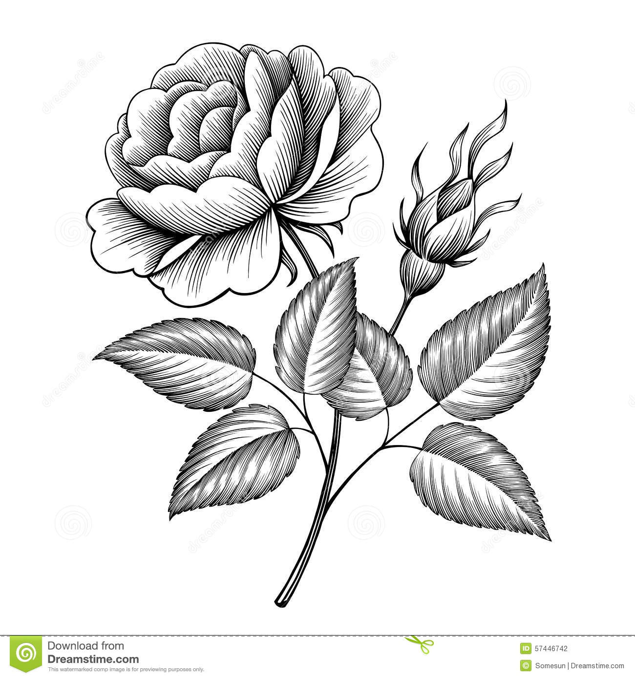 Black and white floral wreath stock vector image 65241515 - Vintage Rose Flower Engraving Calligraphic Vector Stock Photography