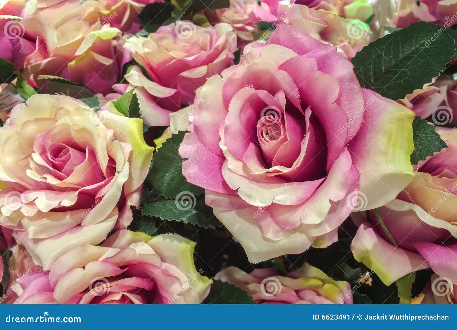Vintage Rose Pattern roxa cor-de-rosa feita da tela usada como a textura do fundo