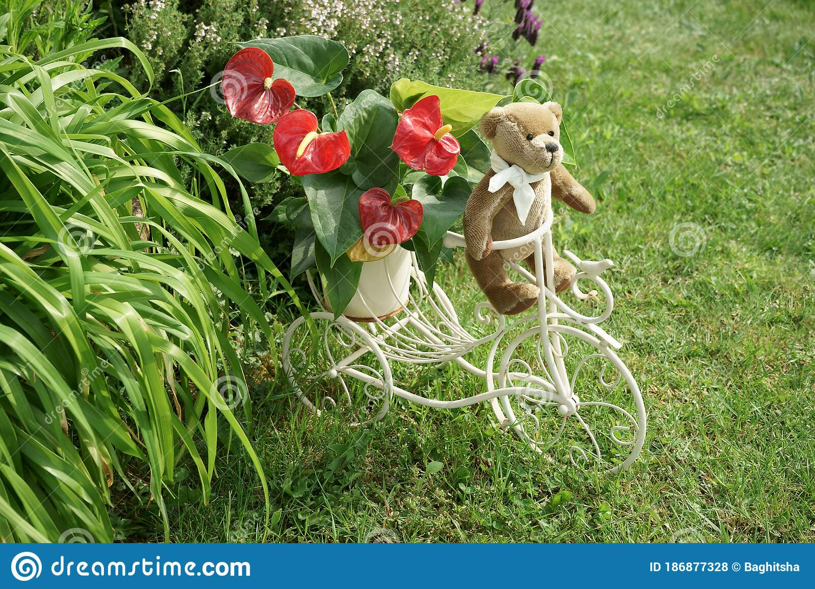 Vintage Teddy Bear On Retro Tricycle In Garden Stock Photo Image Of Driving Vegetation 186877328