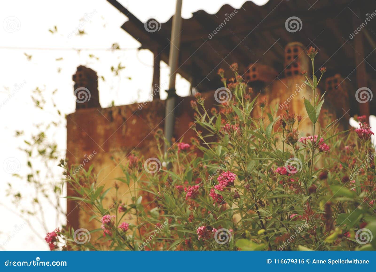 Vintage viejo bien con las flores salvajes rosadas - Rusty Wall Texture