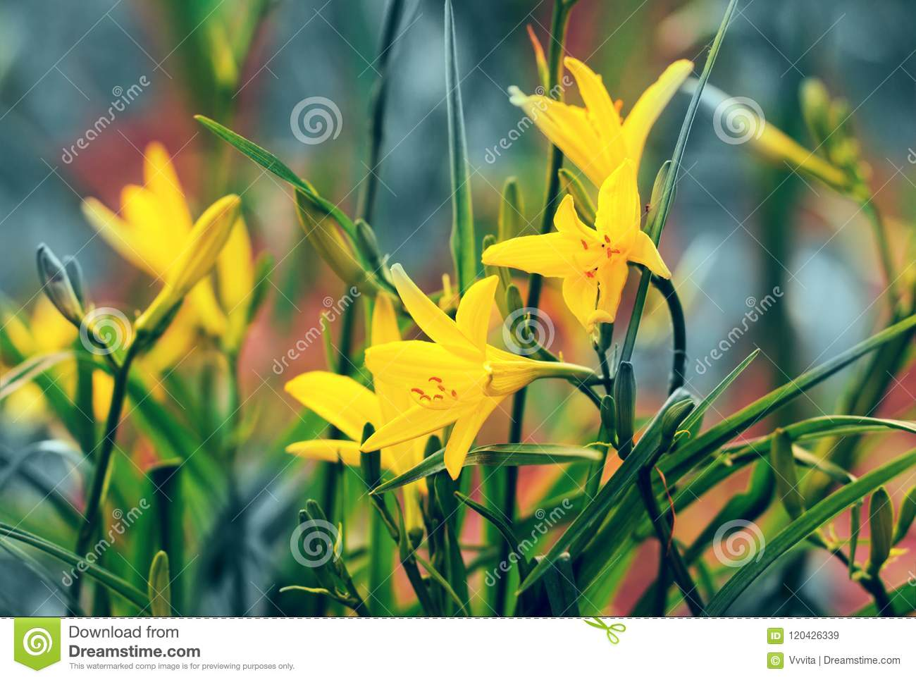 Vintage Wild Lily Flowers Stock Image Image Of Wild 120426339