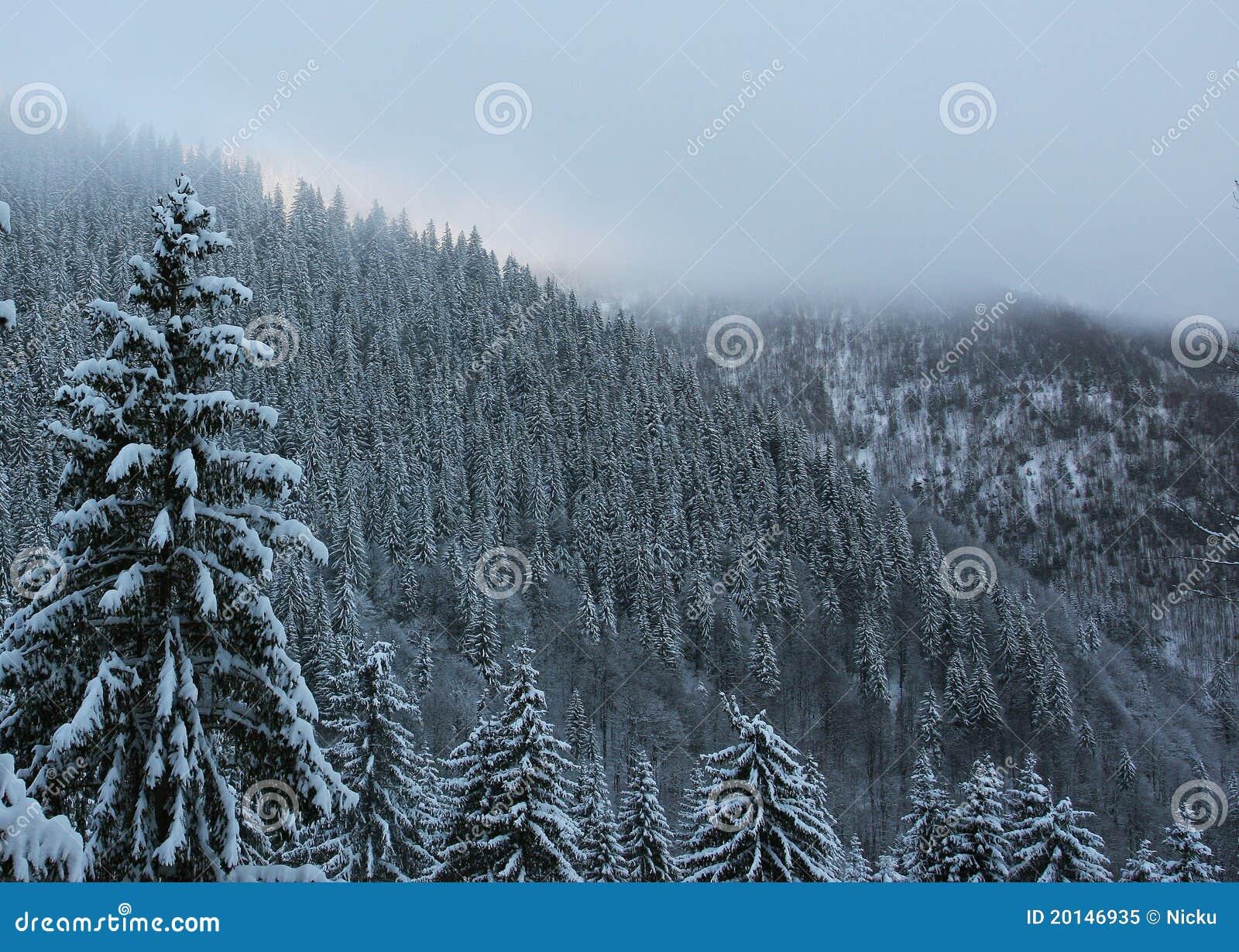 Vinter för skogliggandeberg