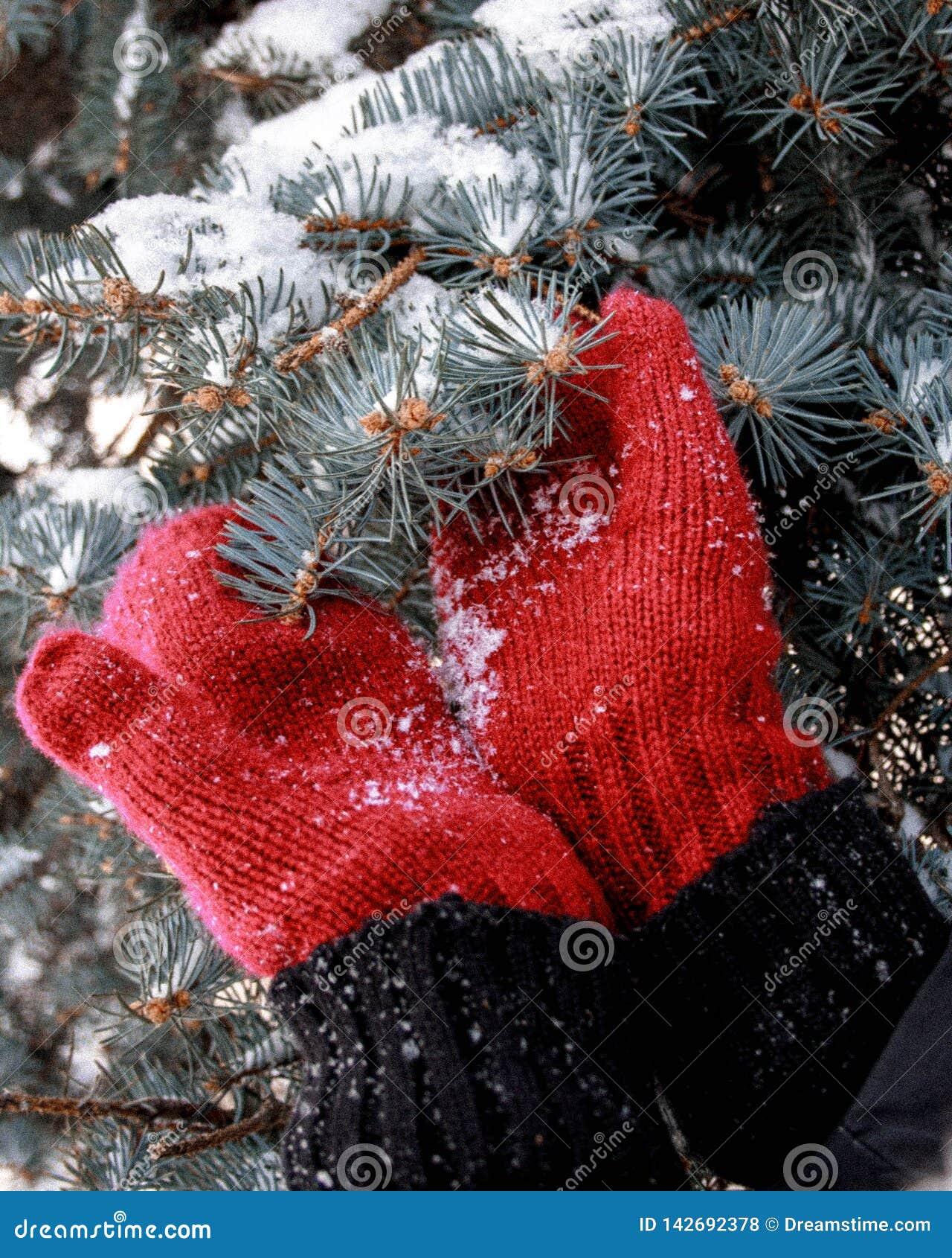 Vinterfoto med tumvanten och gran-trädet