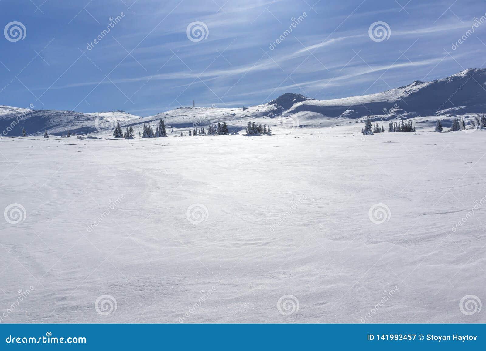 Vinterlandskap av platåPlatoto område på det Vitosha berget, Sofia City Region, Bulgarien