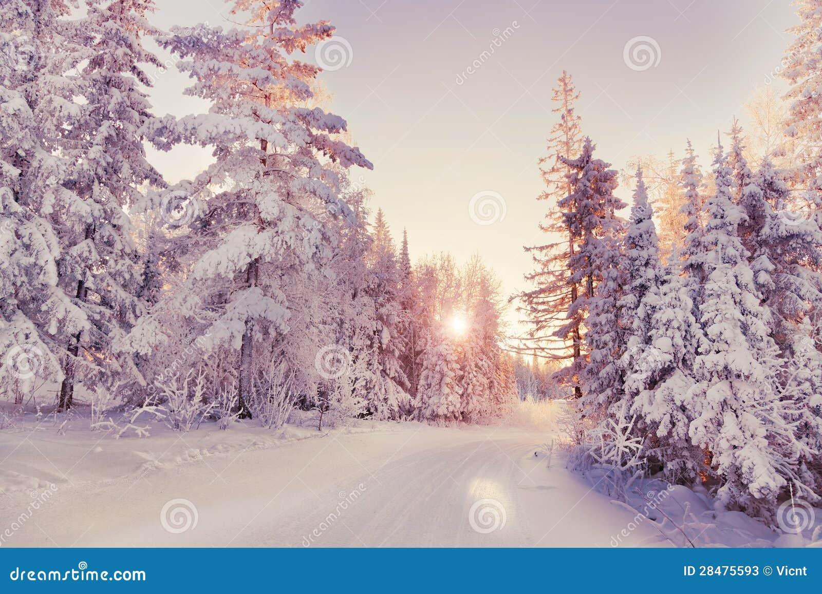 Vintern landskap