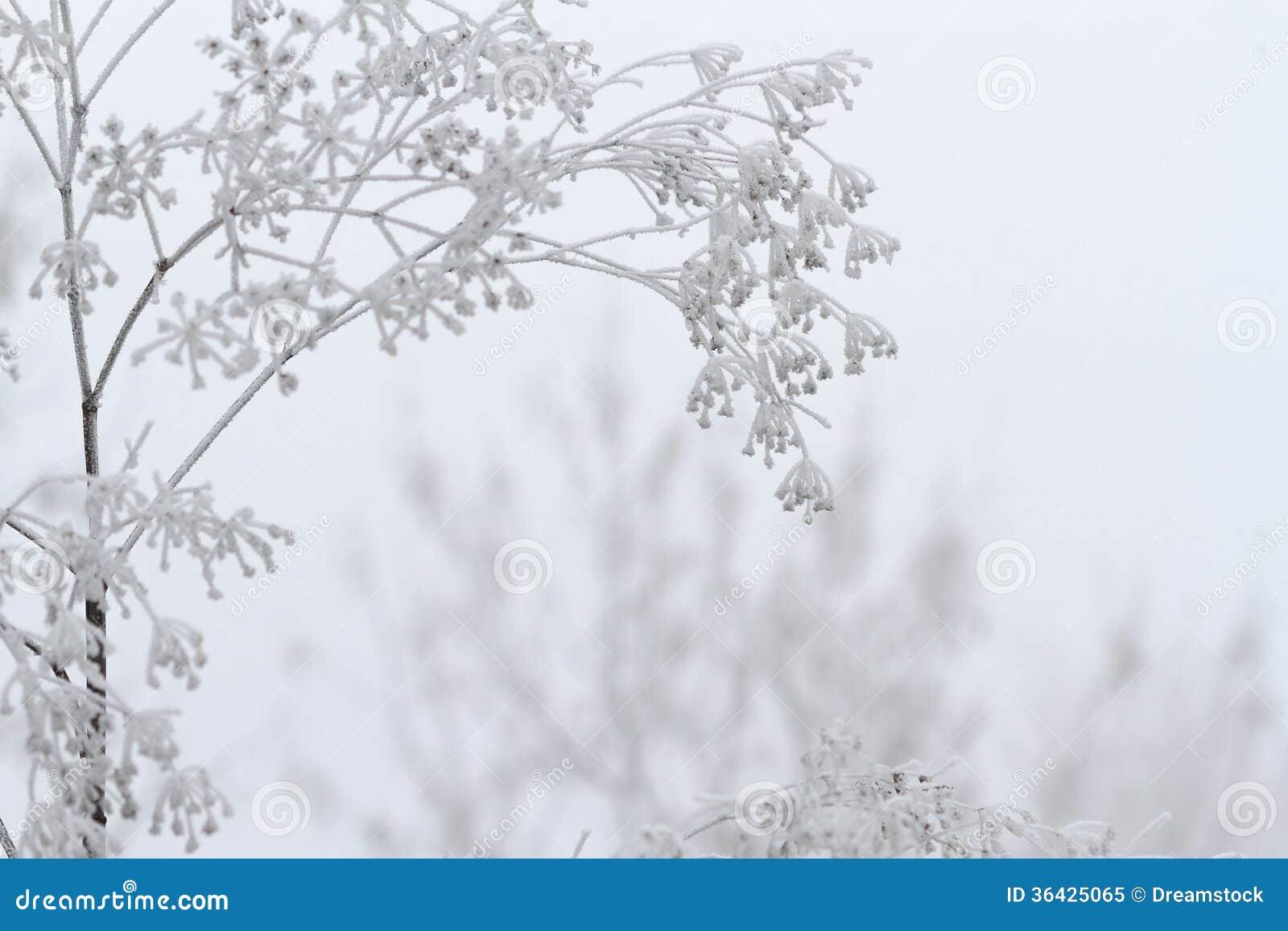 Vinterplats