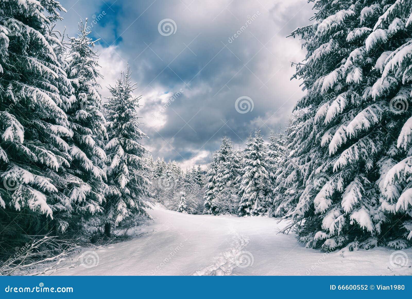 Vintersikt i en skog för Carpathian berg