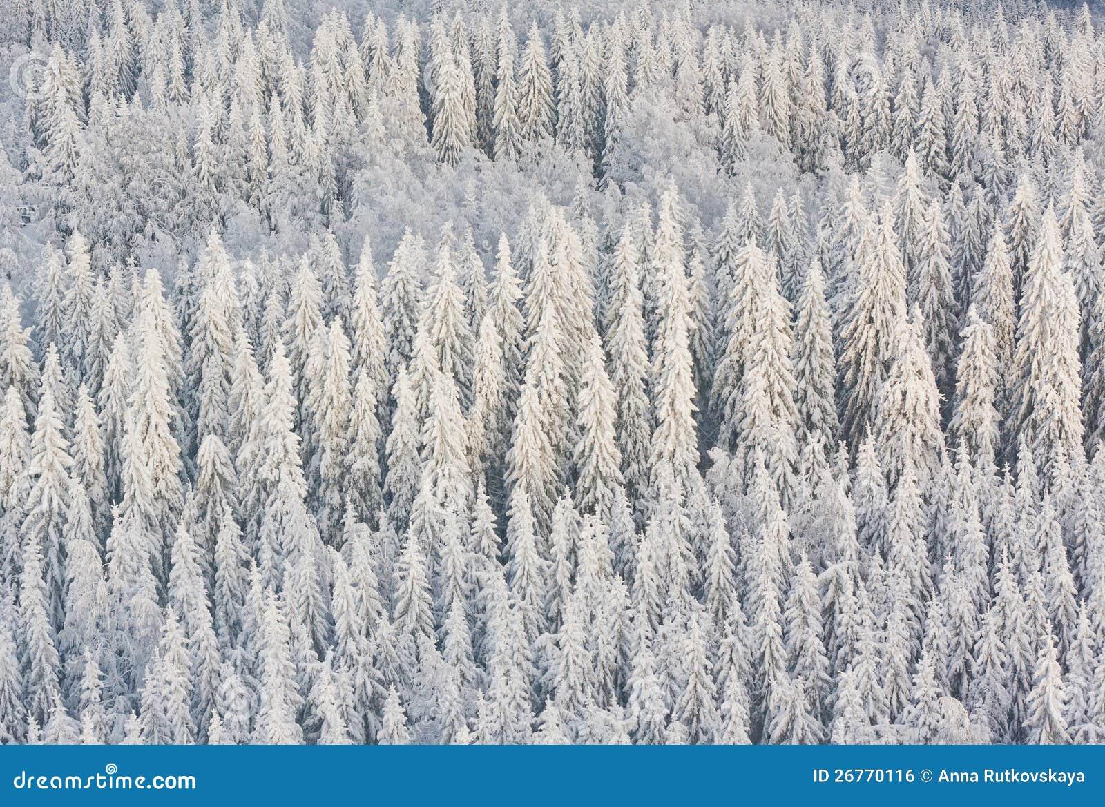 Vinterskog i Finland