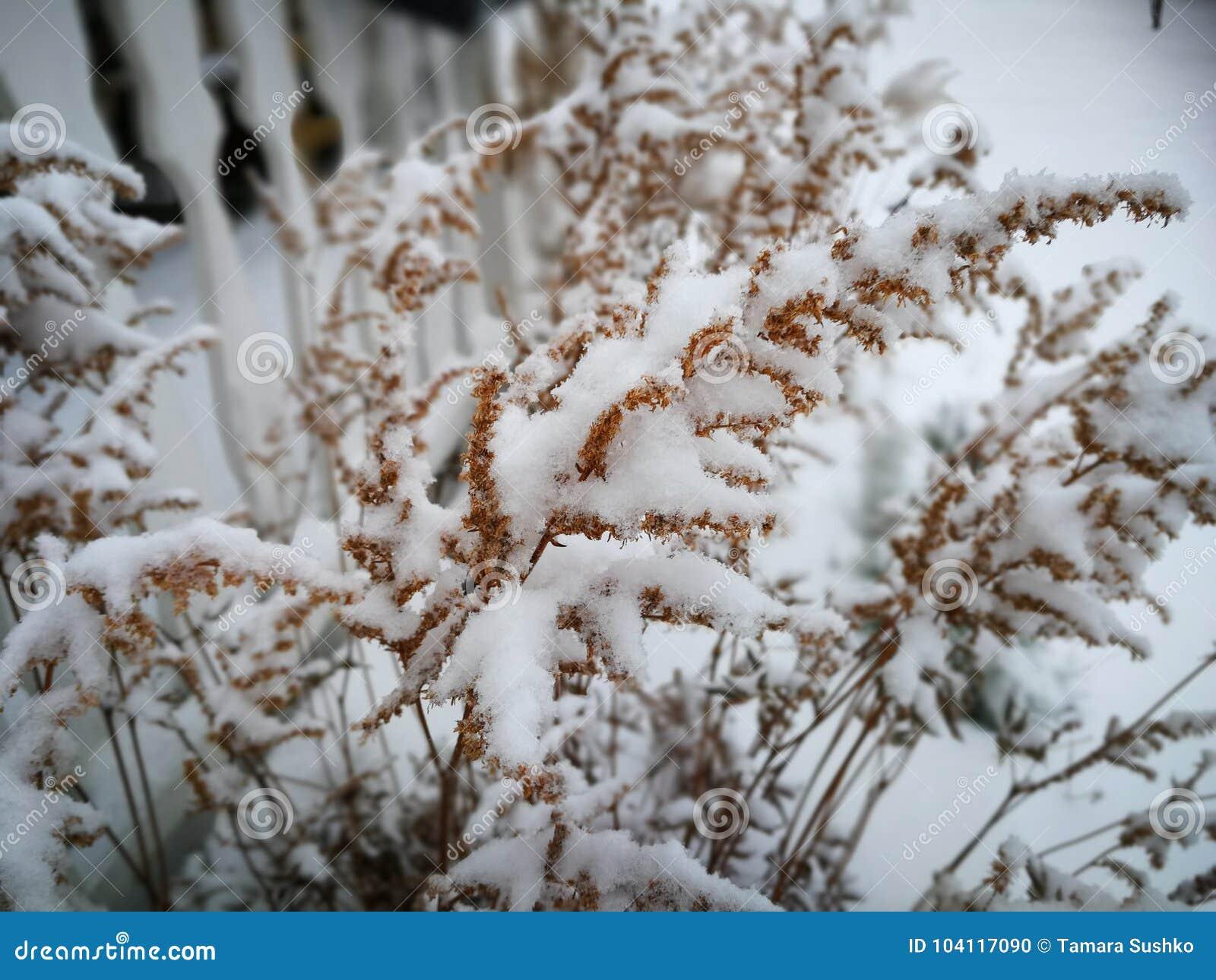 Vintertid i trädgården