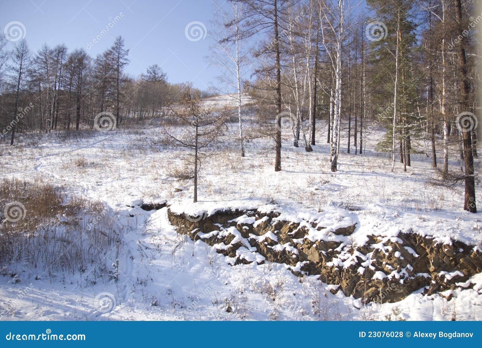 Vinterträ