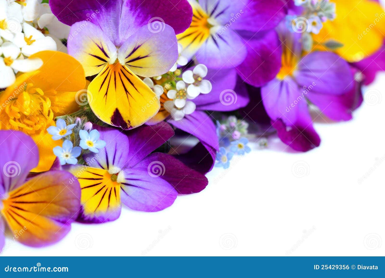 Viola λουλουδιών συνόρων