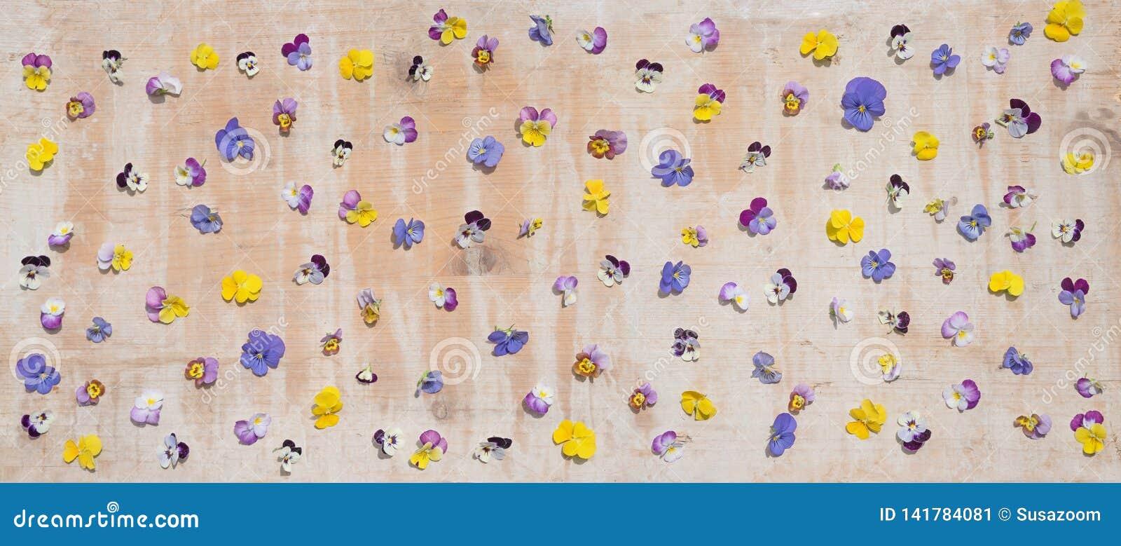 Viola blossoms strewn over old wooden board