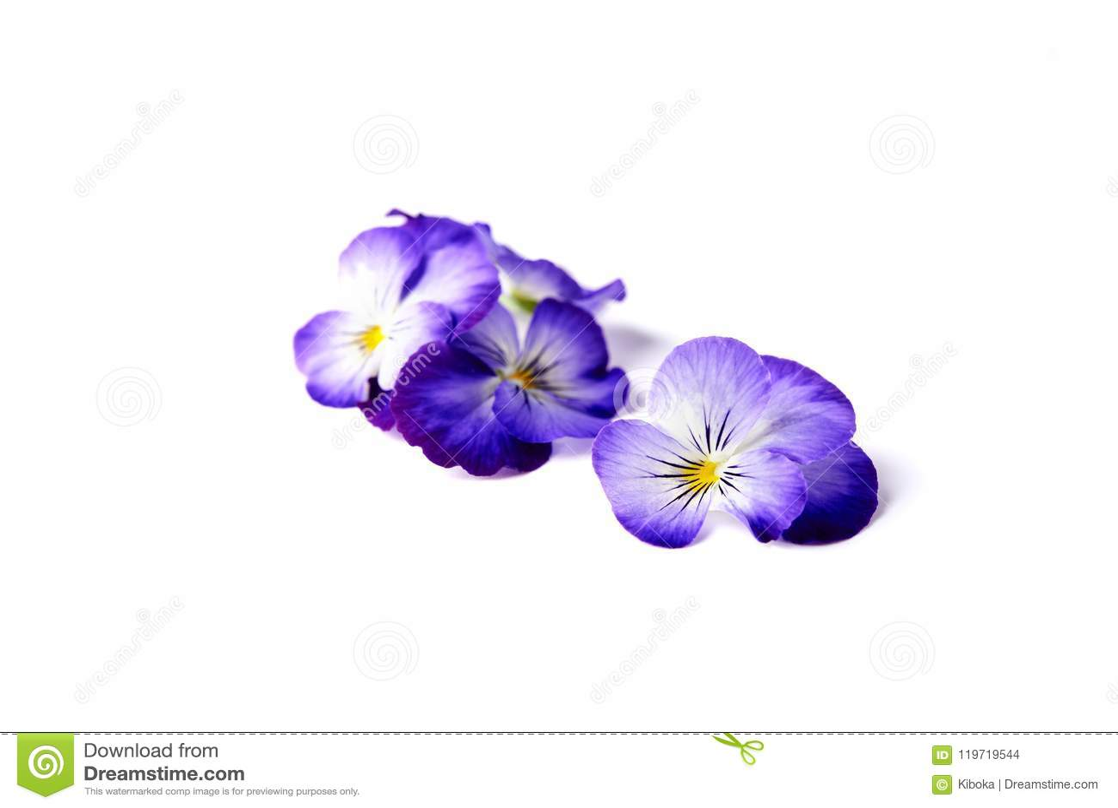 Blue Edible Flowers Of Viola Stock Photo Image Of Herbal Violet