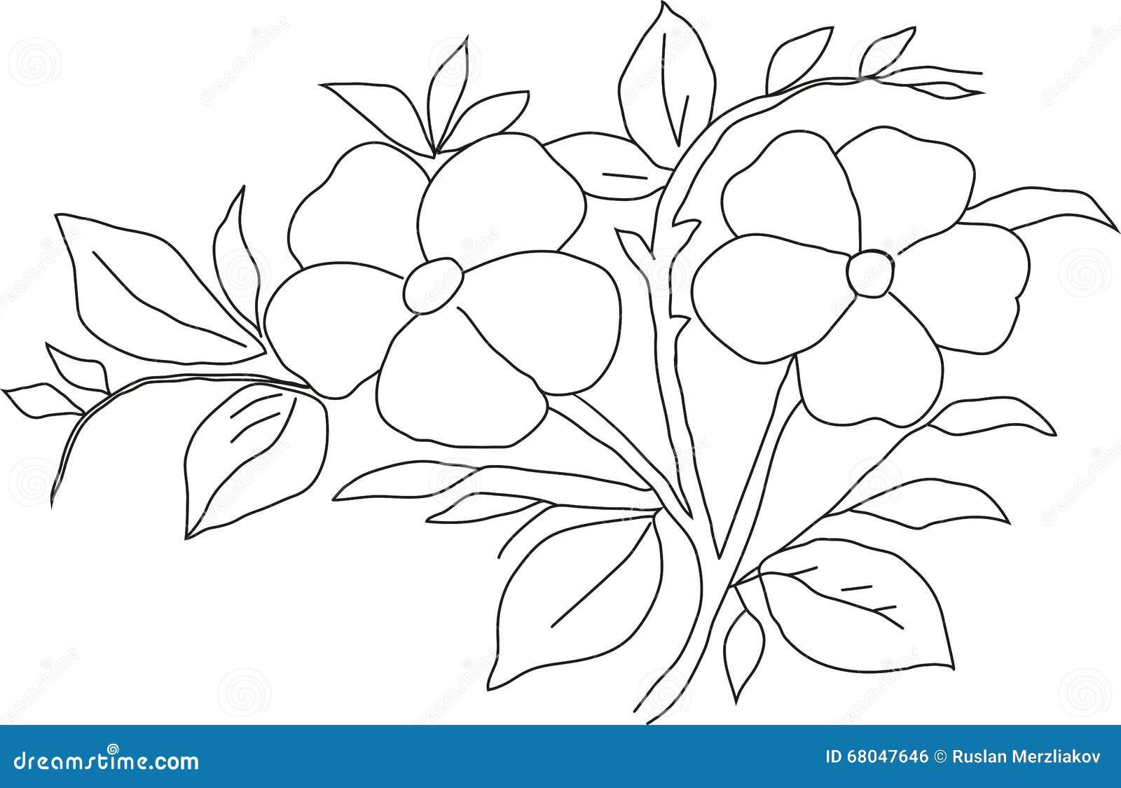 Viola Del Disegno A Matita Illustrazione Di Stock Illustrazione Di