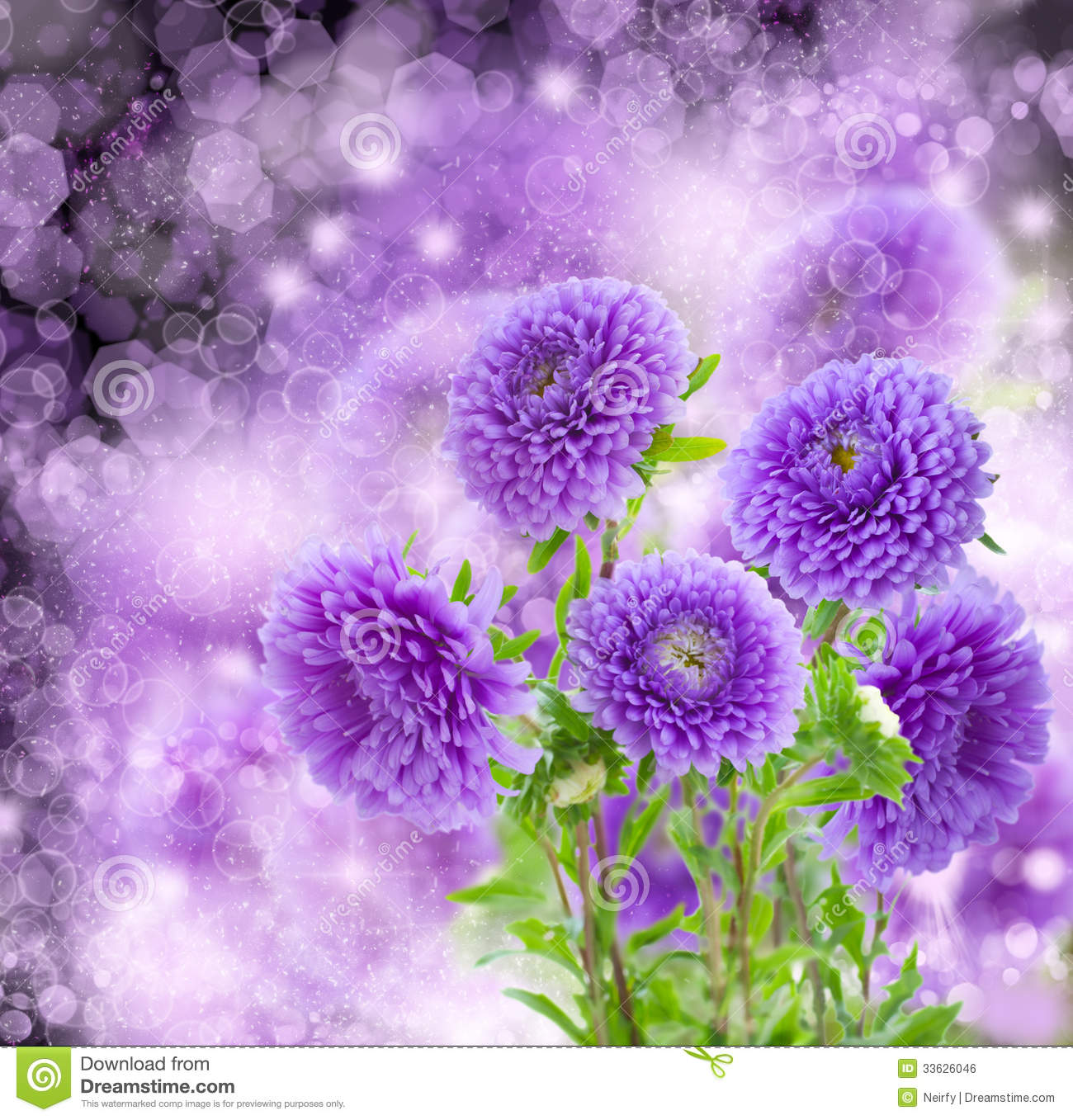 Violet Aster Flowers On Bokeh Background Royalty Free