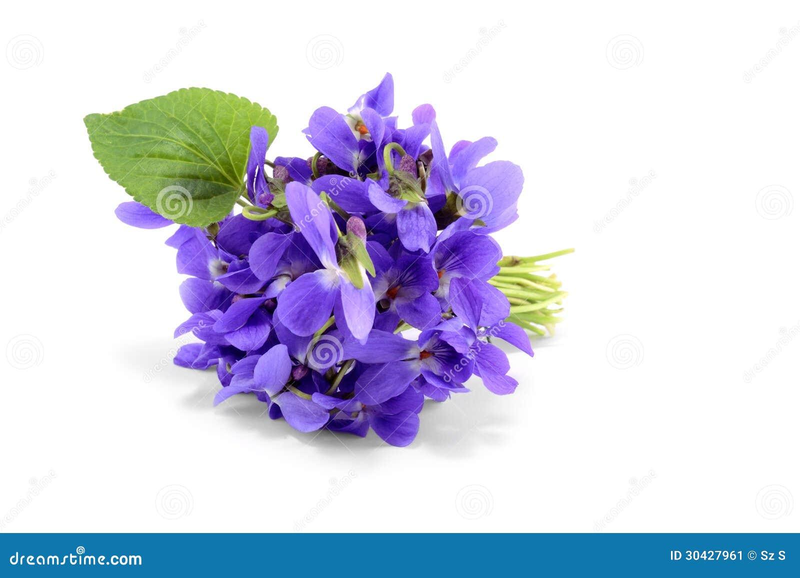 violet bouquet on white stock image image of violet 30427961. Black Bedroom Furniture Sets. Home Design Ideas