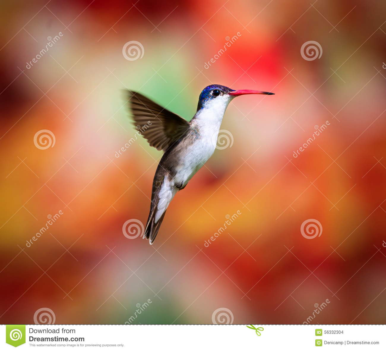 the difference in bird communities using Are you curious to find out as to how many different types of birds there are in the world if you just can't get enough of our feathered friends, read on to know more.