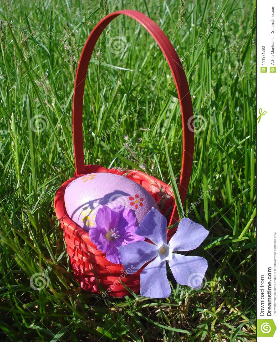 Violet Easter egg and violet spring flowers in red wicker basket