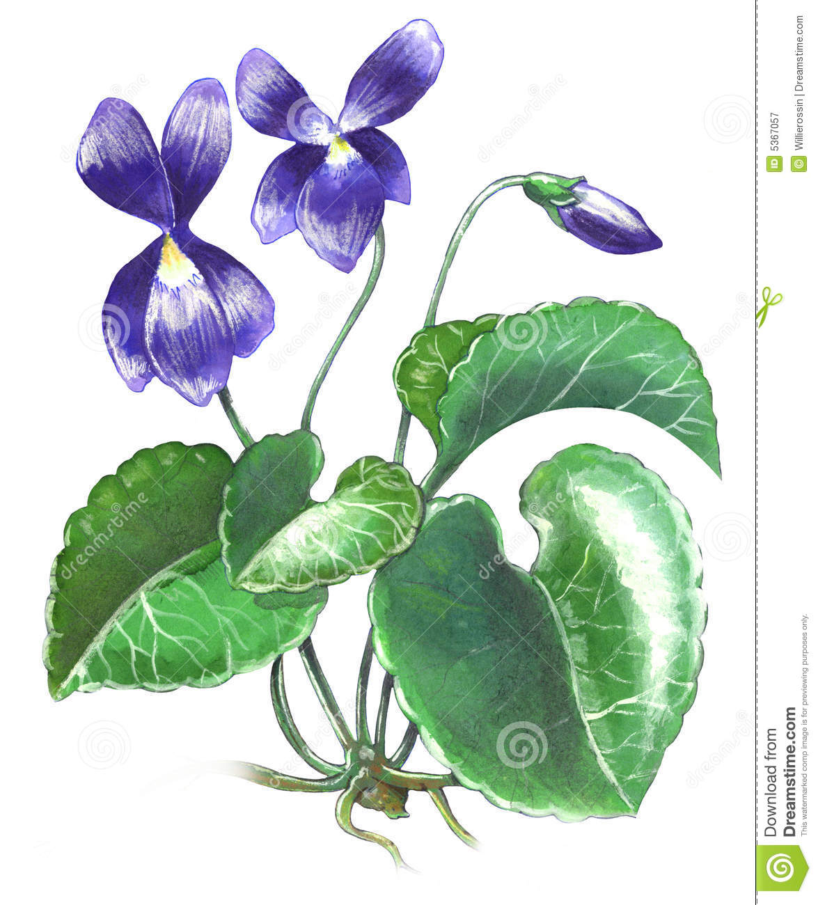 Violet Flower Royalty Free Stock Photography - Image: 5367057