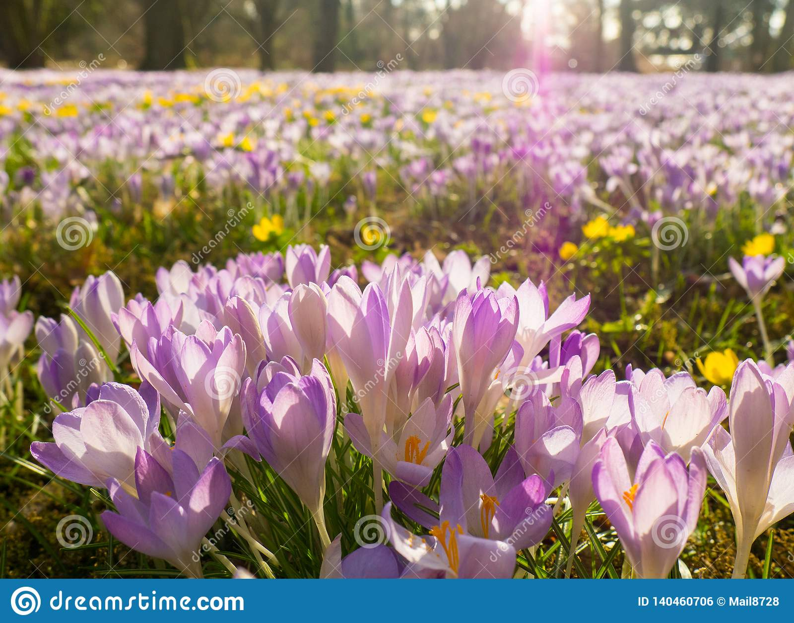 Violet Flowers på floran i Cologne, Tyskland