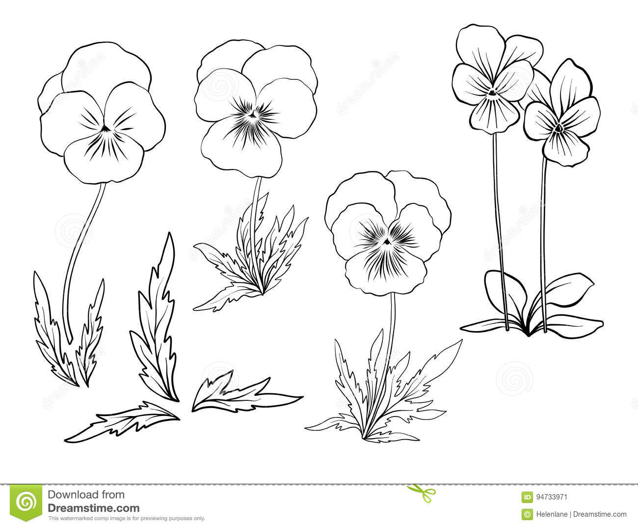 Line Drawing Violet : Violet flowers set of outline stock vector
