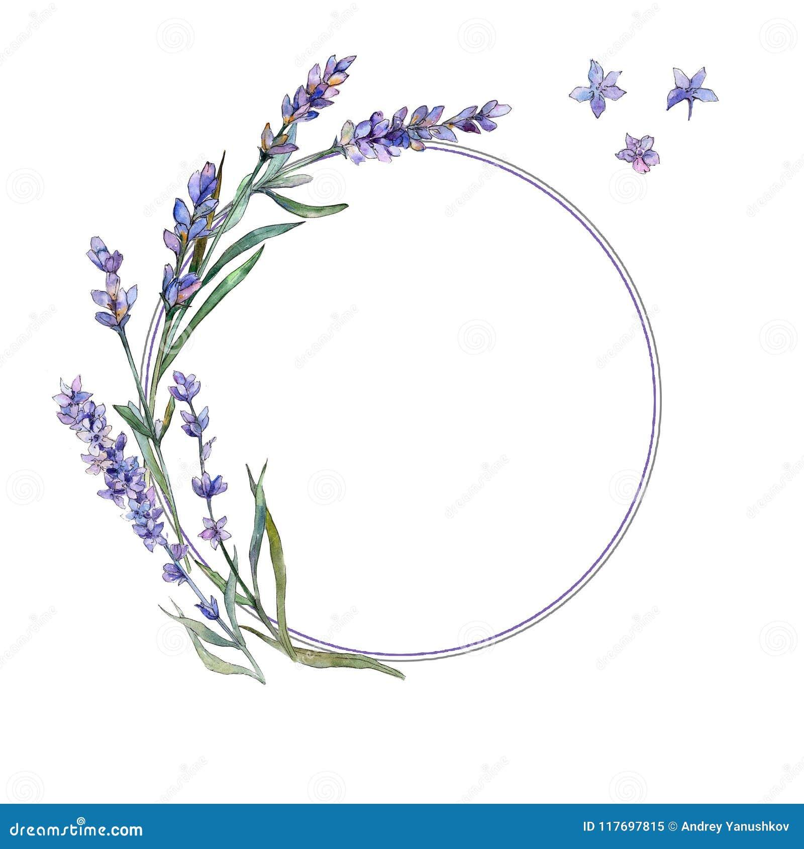 Violet lavender. Floral botanical flower. Frame border ornament square.