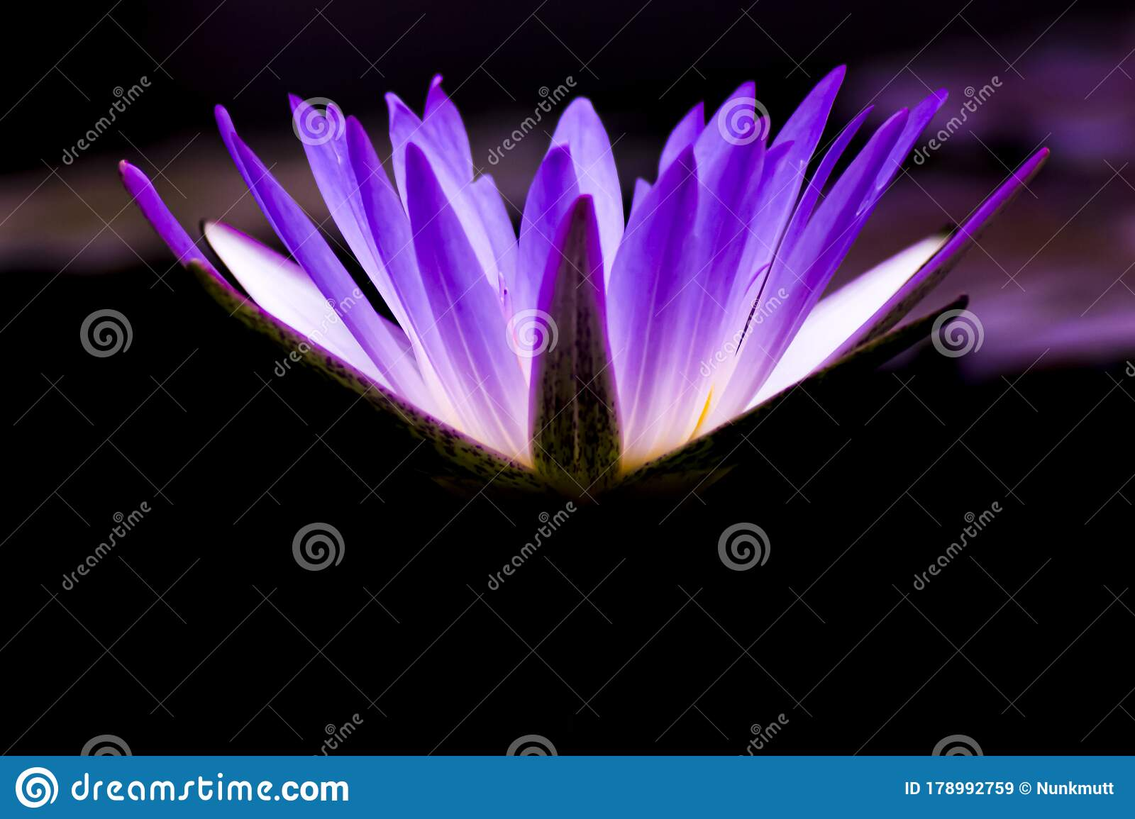 175 Flower Meanings Photos Free Royalty Free Stock Photos From Dreamstime