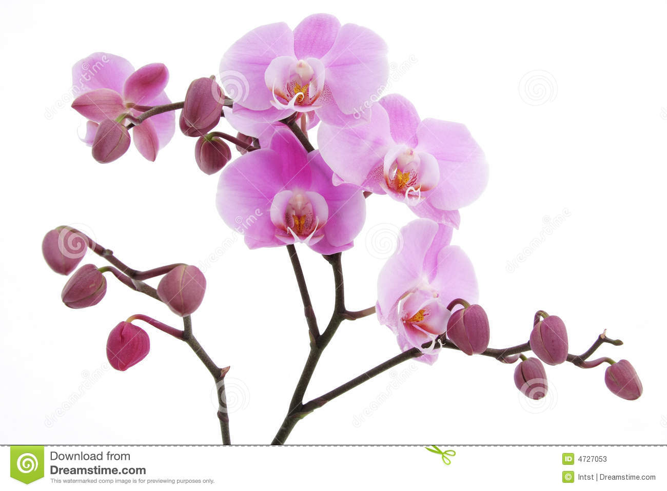 Violet Orchid Flower Stock Photos - Image: 4727053