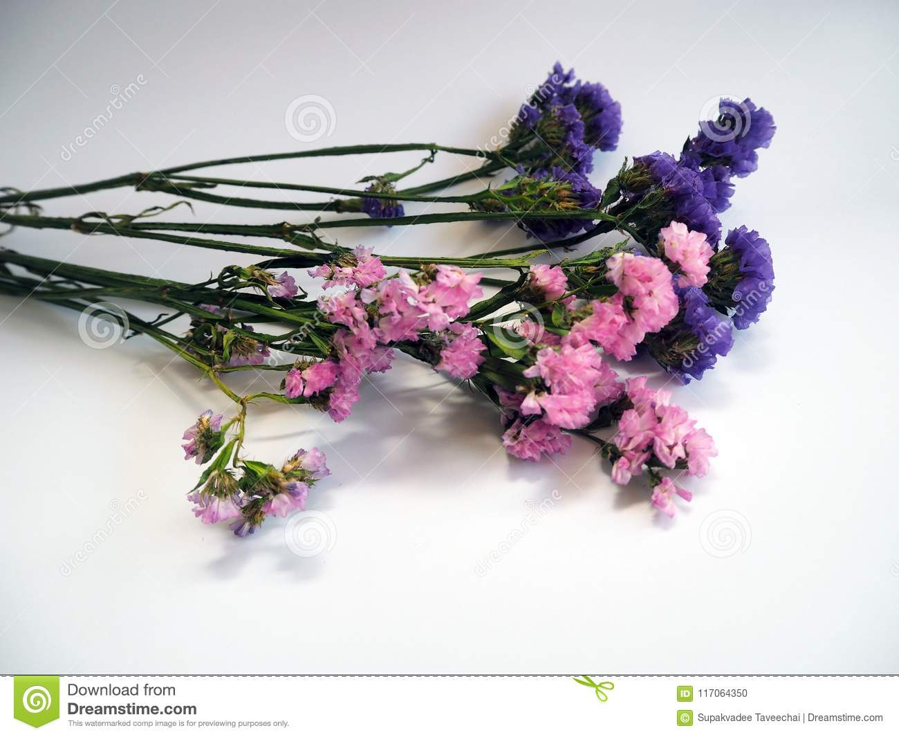 Violet And Pink Statice Flowers Known Also As Limonium Or Sea La