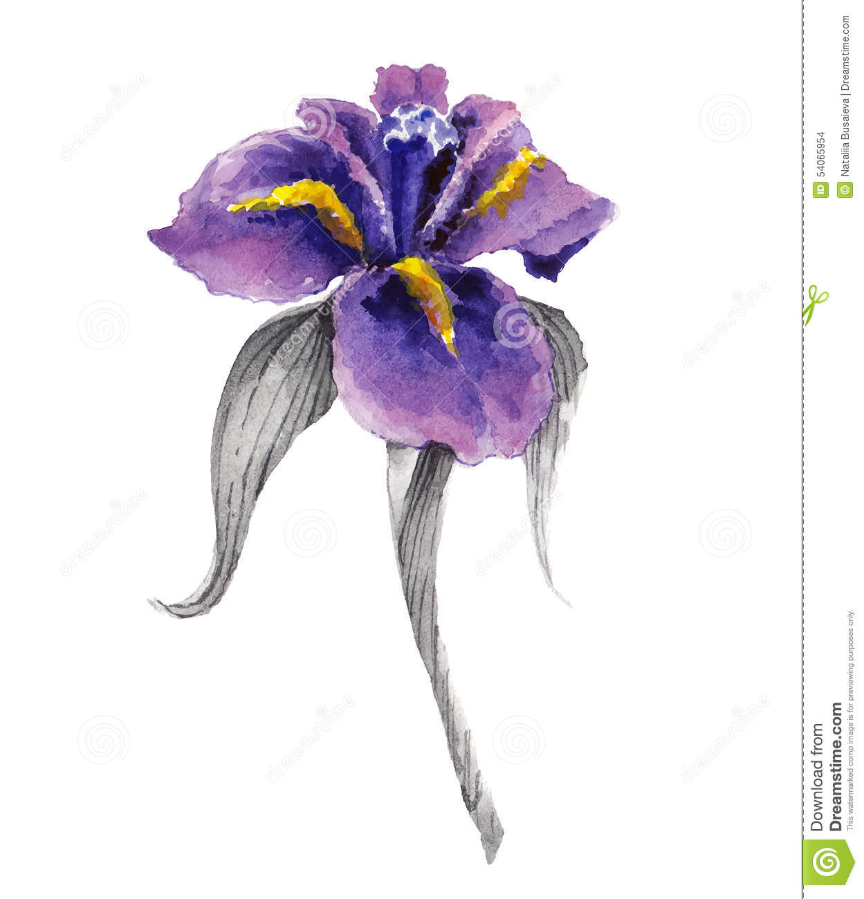 Iris flower watercolor floral illustration vector illustration