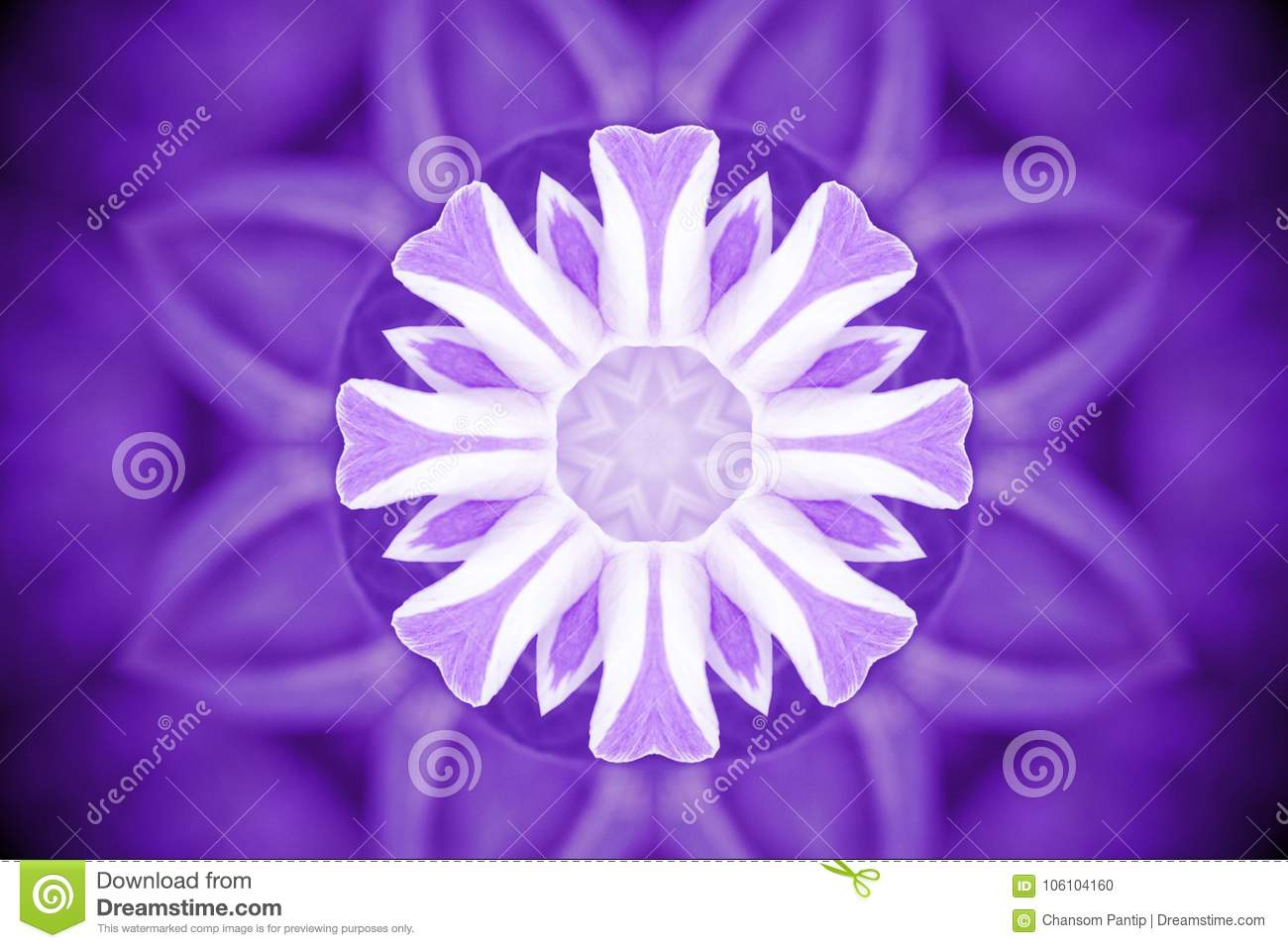 Violet wild flower petals with kaleidoscope effect, abstract col