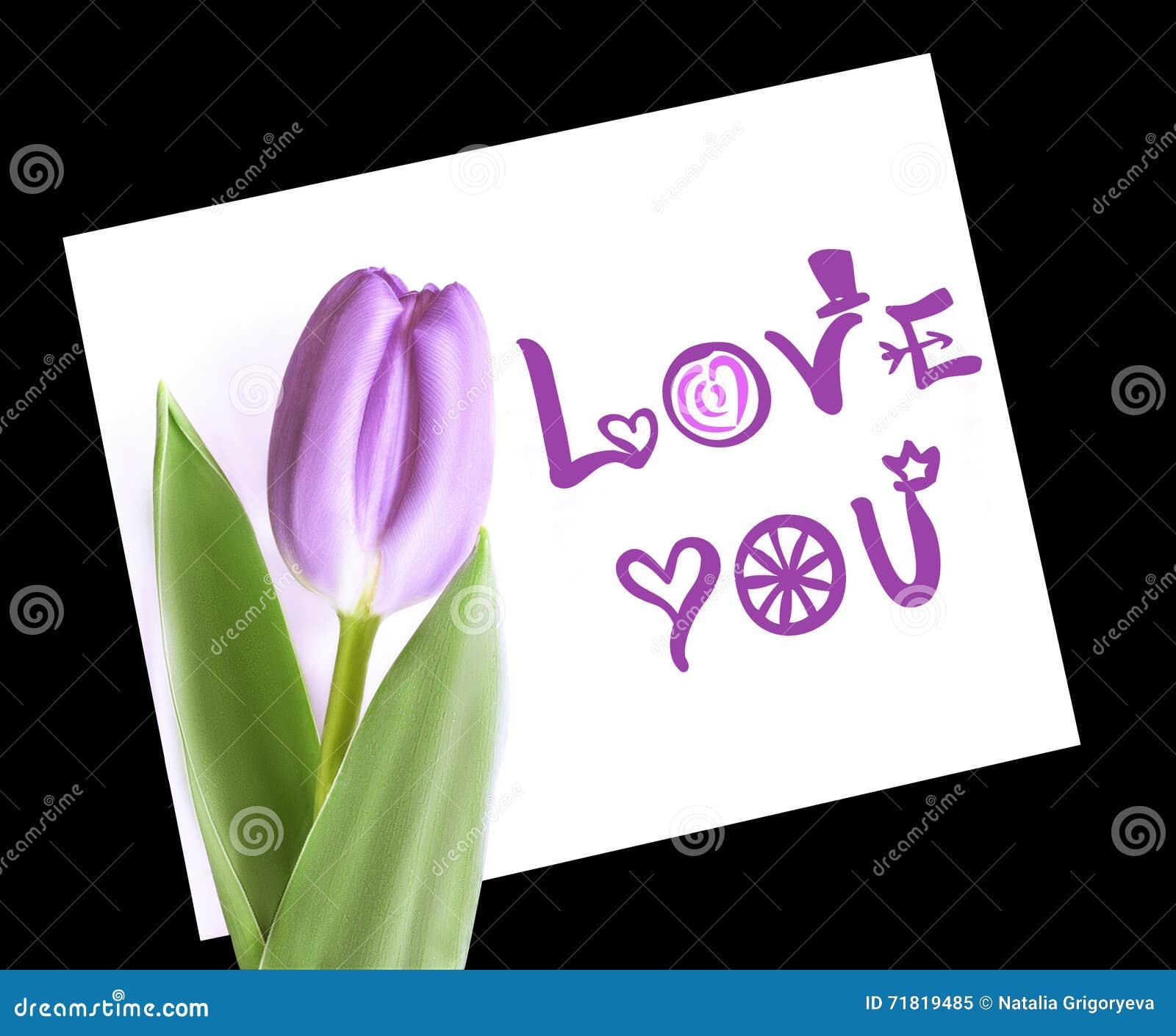 Violett tulpan på vitbokanmärkningsförälskelse dig Isolerat på svart bakgrund